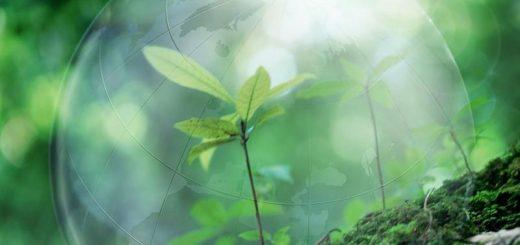 Оценка экологического ущерба от загрязнения почвы: сведения