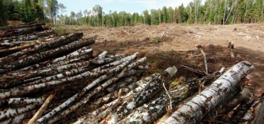 Экологический ущерб, принципы и методы расчета экологического ущерба