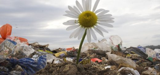 Расчет экологический вред для