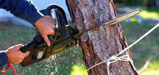 Расчет экологического ущерба при вырубке деревьев лесозащитной полосы