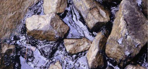 Расчет экологического ущерба от загрязнения почвы