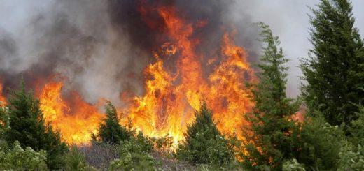 Расчет экологического ущерба от пожара