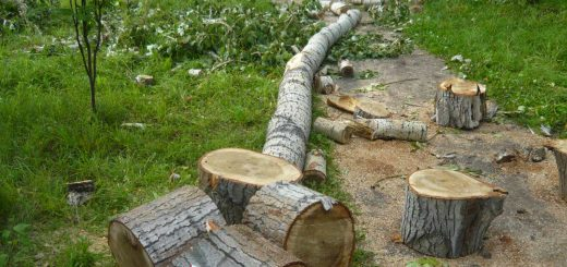 Расчет вреда окружающей среде при сносе зеленых насаждений
