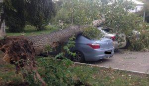 На припаркованный автомобиль упало дерево