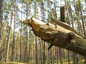 Падение дерева: судебная практика