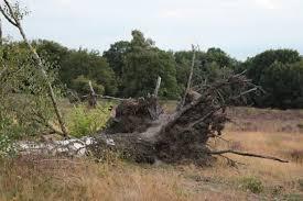 Экспертиза упавшего дерева