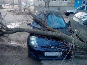Упало дерево на автомобиль
