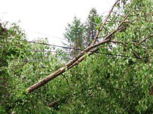 Падают деревья