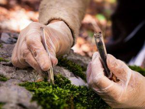 Комплексное экологическое обследование территории