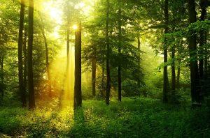 Как произвести оценку экологического вреда?