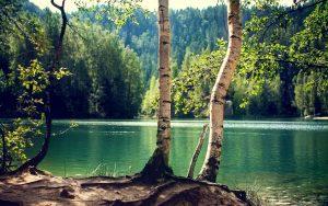 Экологический ущерб от загрязнения окружавшей среды