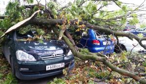 На автомобиль упало дерево что делать?