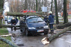 Дерево упало на машину в Москве, что делать сразу после этого