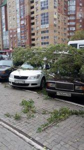 Падение дерева на автомобиль ОСАГО