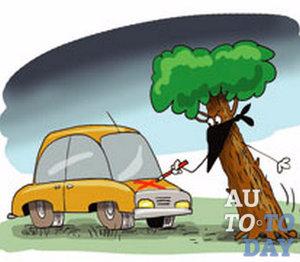 Упало дерево, куда звонить в Москве?