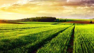 Практика расчета ущерба окружающей среде