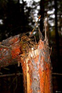 Сломалось дерево