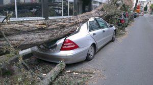 Упало дерево на авто