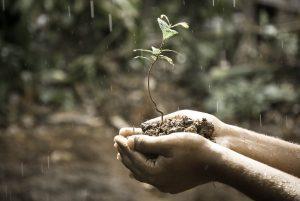 Проблемы истощения земли