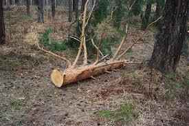 Противодействие незаконной вырубке леса