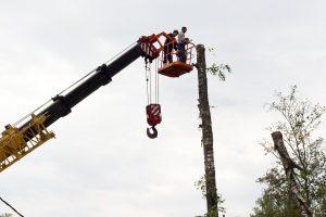 Ответственность за выруб дерева