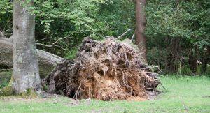 Упало дерево куда обращаться