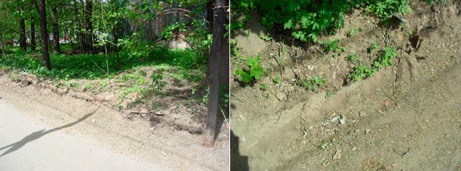 Рис.№4. Общий вид срезанного/нарушенного почвенно-растительного покрова – Яузский лесопарк.