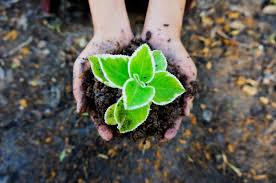 Почвенные экологические факторы
