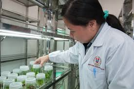 Биологический анализ почвы в лабораторных условиях