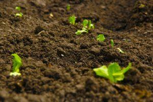 Почва, как объект анализа