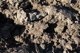 Исследование состава почвы