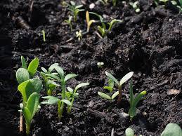 Мониторинг плодородия почв