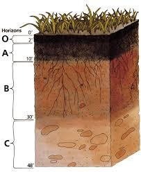 Сделать анализ почвы