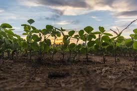 Мониторинг плодородия почв земель сельскохозяйственного назначения