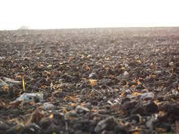 Проведение исследования почвы