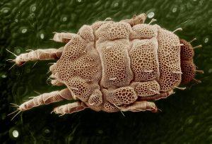 Санитарно-паразитологическое исследование почвы