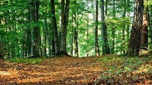 Экологическое нормирование при мониторинге лесов