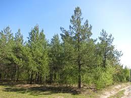 Как проводится мониторинг лесного фонда