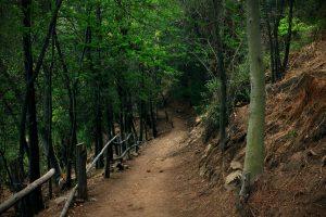 Мониторинг лесных покровов