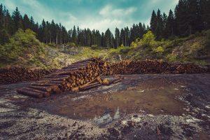 Мониторинг лесного хозяйства
