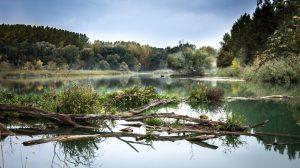 Экологический мониторинг поверхностных водных объектов