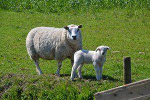 Мониторинг объектов животного и растительного мира