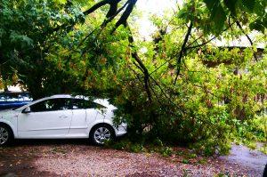 Что делать, если дерево упало на машину?