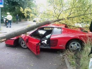 Падение деревьев на авто, что делать нужно?