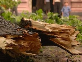 Как доказать, что дерево было повреждено на момент падения?
