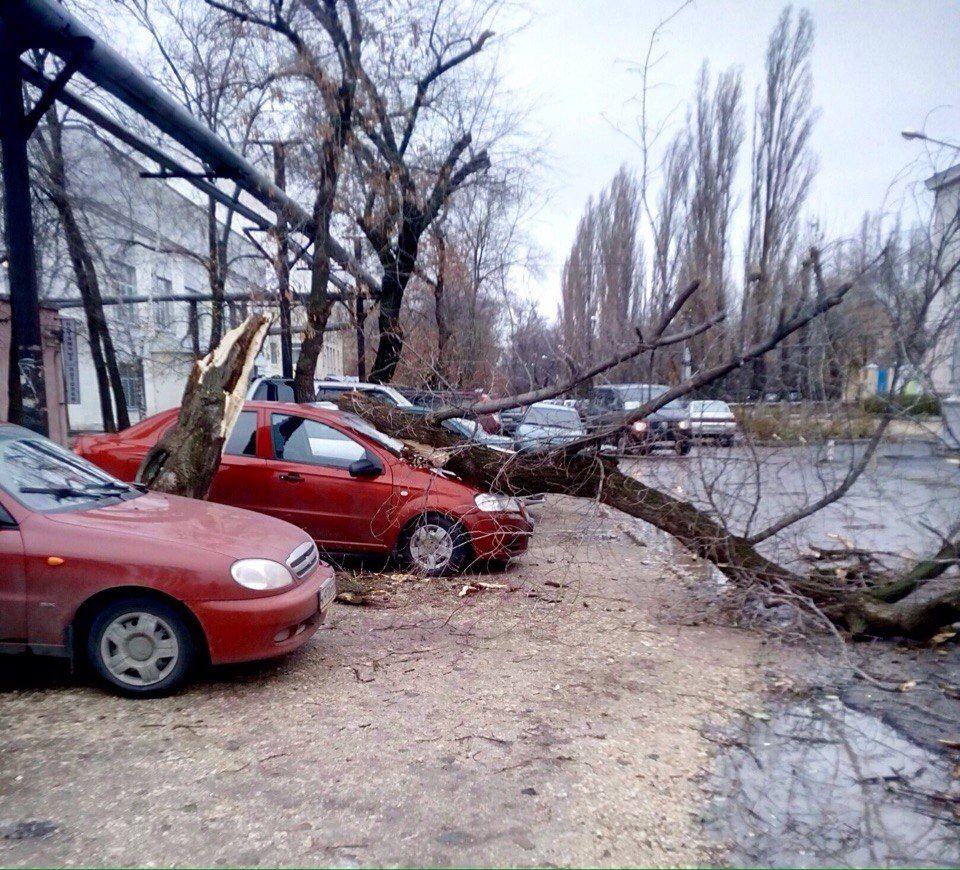 Сухое дерево упало на машину: что делать необходимо