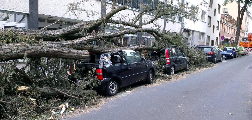 Если упало дерево на машину, что делать следует?