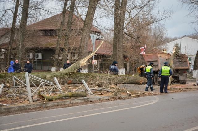 Куда звонить, если упало дерево? Москва