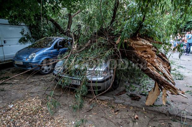 На автомобиль упало дерево: судебная экспертиза