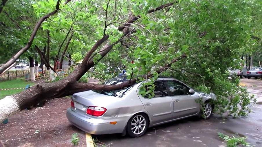 КАСКО: падение дерева
